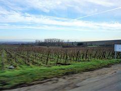 リボーヴィレを離れると、ナヴェットはブドウ畑の広がる道を走ります。