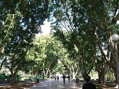 公園内の小道。高い木々の下を歩くだけで癒されます。絶好の散歩スポットですね。  これからお昼を食べに行きたいと思います。