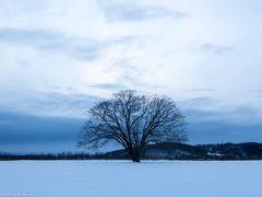 夕日を待ってハルニレの木へ。 この日は訪れた人もいないようで、木の近くまで到達するのに、真っ白な雪原の中を歩んでいきます。 雪原というか、凍ってます@@; 踏みぬくことはないですが、軽めの私は一回、乗っただけでは沈まず@@; 安定感がないので力を込めて踏み固めます。