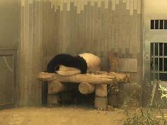 上野動物園でパンダ