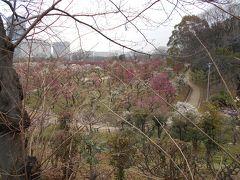 ミライザ大阪城を左手に見て、お濠を左側にグルッと周りながら、JR大阪城公園前駅へ歩いていると「梅園」見えて来ました。 まだ、5~7分咲きという所でしょうか。  大きなカメラ持った写真家さん?やカメラ待った人々が写真を撮っていました。