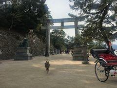 参道をひたすら歩いて、厳島神社へ。 鹿がお出迎え。 奈良の鹿と違ってこちらの鹿はおとなしいです。