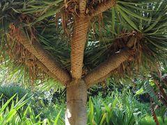 南国らしい?強そうな木ですね