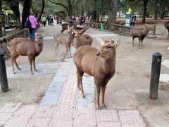 興福寺から県庁へ向かいます。  ここで鹿せんべいをあげました^^@  だから、にゃんこの後にたくさんの鹿ちゃんがついてきた