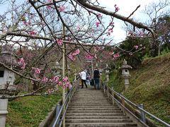 この階段で翌日筋肉痛になるとは(涙 傾斜のため、花が近くで見れてとても良かったんですが。