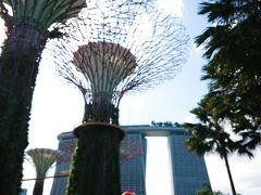 着きました!  カーデンズバイザベイです。 奥にはマリーナベイサンズが見えます。 シンガポールと言えばここ!的エリアですが、 今回の旅行では初です^^;