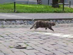 <リガ> 新市街 貴重な猫写真ですがピンぼけ。アルベルタ通の歩き去る猫。こんな素敵な界隈に住めて羨ましい。