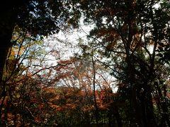 右手のお庭辺りを撮ったのですが、・・ 紅葉が上手く映ってなくてすいません。  此方を後に叡山電鉄の最寄り駅へ歩いてそこから「最終目的地」「圓光寺」へと・・