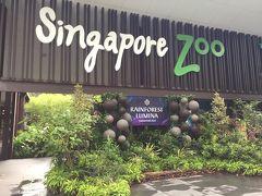 空港からはタクシーでこの日泊まるホテルに向かい、荷物を預ける。その後ツアーバスにピックアップしてもらい、専用バスで楽々移動。この日は朝からシンガポール動物園に行くツアー参加しました。  シンガポール動物園は交通の便があまりよくないので、送迎付きツアーに参加するのもありです。ツアーといっても、動物園に着いたら解散。自由散策です。