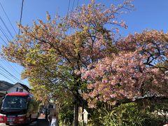 原木は個人のお宅にありました。 前の通りは結構な交通量があり、想像していた風景とは違っていました。