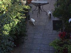 ホテルへ戻る途中 偶然 トッレ アルジェンティーナ神殿跡に 猫グッズがあるって聞いていたのだけど 今回は パス