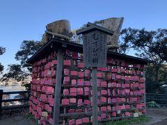 御神木(むすびの樹) 。  江島神社の縁むすび絵馬は、相手の名前を書いてむすびの樹にくくると恋愛が成就するそうですよ。