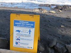 ここは高い確率でウミガメに会うことができる場所です。 今までに何度か訪れて会えなかったことはありませんでした。 ただし近付き過ぎたり触ったりすることは禁じられています。
