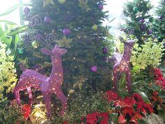 チャンギ国際空港にて。クリスマスの飾りでとても素敵でした。 空港内、昨年はハリーポッター一色でしたが、今年はアナと雪の女王2がメイン。 飛行機のトラブルで、トランジットの時間が1時間増えた私たちは空港内を散策。 空港内で行われていたアナ雪のクイズ(誰でも参加OK)で、娘はステッカーやチョコレートをいただき、写真を撮ってもらってフレーム付きでいただくという至れり尽くせりのおもてなし。チャンギ空港、綺麗で楽しくて素晴らしい!