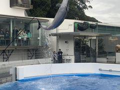 ちょうど良い時間にイルカのショーをがあったので、見に行きました。 素晴らしいジャンプ力!