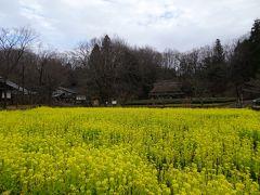「壱の畑」では菜の花が見ごろを迎え、里山の風景そのものでした。