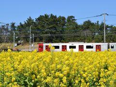 糸島・福吉の産直市場「福ふくの里」の菜の花畑