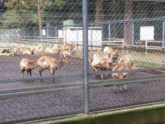 鹿園です。 鹿島神宮周辺の森には、かつては多くのニホンジカが生息していたそうですが、絶滅し現在は約25頭が神の遣いとして大切に飼われています。  今では、鹿といえば奈良の春日大社が有名ですが、春日大社の創建に際しては、白い神鹿の背に分霊を乗せ多くの鹿を引き連れて出発し、1年かけて奈良まで行ったと伝えられ、奈良の鹿も鹿島神宮の発祥とされています。  サッカー・Jリーグの「鹿島アントラーズ」の名前の由来にもなっています。