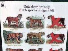 チェンマイ市内からソンテウをチャーターして、郊外にあるタイガーキングダムというところへ行ってみることにしました。  22km位離れているので、40分くらいかかりました。北方に位置しています。  虎は絶滅危惧種で、もはや6種類しか残されていないのです。