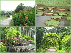 <シンガポール植物園>  2015年に世界遺産登録された、シンガポール植物園、基本無料です。 広大でよく整備が行き届いて、散策に最適。 (下段は例外的に有料のナショナルオーキッドガーデン)