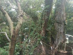 ホテルから来宮神社へ歩いてやってきました。 木々が多くてホッとします。