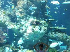 セントーサ島のアクアリウムです。 一般的な水族館ですね
