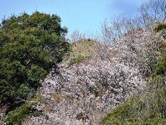円覚寺の山