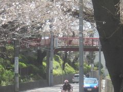 洗足池公園と桜坂に桜を見に行きましたが、どちらもまだ満開とは言い難かった… ですが、翌週には東京も外出自粛要請が出たし、天気も悪かったので、この日に行っておいて良かったとしましょう