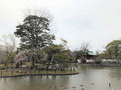 桜の名所のはずの源平池。