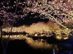 桜(早咲きの寒桜)もきれい!イルミネーションは毎年10月頃~5月頃まで行われているようで、こういった植物のライトアップと共に楽しめるのは魅力ですね。