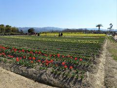 ここからは前日25日(水)に訪れた「和泉リサイクル公園」の春の花です。  新聞に、ラッパ水仙が満開・・・と掲載されたので大賑わいでした。  駐車場と隣接のグラウンドも開放されていて多分100台以上駐車出来たと思います。