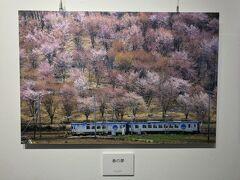 「春の夢」 川上村五所平か 信濃川上あたりかな 桜の種類、色とりどりの桜のバックがいい 観光列車ハイライン1375が走り抜ける