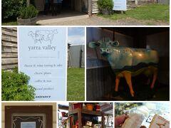 次に向かったのは、こちらも人気と評判のチーズ屋さん「yarra valley cheese factory」。  しかし、外観はかなり老朽化している小屋にしか見えない。。。。  ですが、中は意外に広く、店内も多くの観光客で賑わっていました。  外観は、演出ですね(笑)。  ワインの友のチーズを調達!