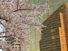 隅田公園-3 墨田区役所あたり     49/   39