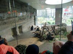 そして双子のもう片方の子と母パンダが出てきました。観客は大喜びです。