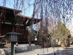 枝越しに見た本堂。安貞元年(1227)に建てられたもので、京都で最古の建物です。 国宝。