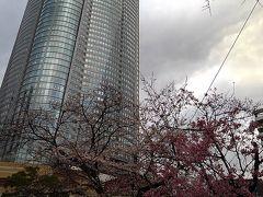 毛利庭園の桜、