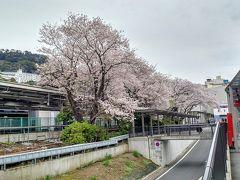 東京を出発して最初の乗換駅、熱海です。 熱海桜は2ヶ月ほど前に散ってしまいましたが 駅前のソメイヨシノはしっかり咲いています。