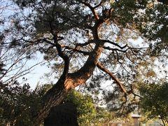 江戸時代、歌川広重の名所江戸百景『千束の池袈裟懸松』にも描かれた洗足池の畔にある松。こちらは6代目。 弘安5年9月(1282年)日蓮上人が身延山から常陸国(茨城県)に湯治に向かう途中、日蓮に帰依していた池上宗仲の館(池上本門寺)を訪れる前、千足池の畔で休息し傍らの松に袈裟をかけ池の水で足を洗ったと伝えられる、この言い伝えから、この松を袈裟掛けの松と称することになり、また千足池を洗足池とも称されるようになったといわれる。