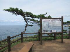 高さ35mの断崖で松本清張の「ゼロの焦点」の舞台となったことはあまりにも有名。 でも・・展望台からは「断崖」という程の景観は望めません。