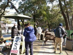 歩道で「鹿せんべい」売ってる!(๑´∀`๑) インバウンドの方々中心に、鹿せんべいあげてる人、結構多いです。