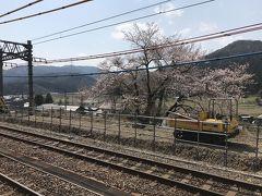 近江塩津駅の桜。