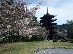 瑠璃光寺五重塔。大内氏全盛期の大内文化を伝える曹洞宗の寺院。こちらの五重塔は国宝に指定され、日本三名塔でもあるらしい。辺り一帯は香山公園になっている。気温も暖かくて、桜が綺麗です。
