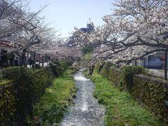 一の坂川、丁度桜が満開で、賑わっていました。