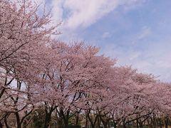 新型コロナウイルス感染が拡大しているので旅行は自粛して、もっぱらご近所をお花見散歩。
