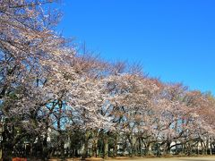 この後天気は崩れる予報なので、今年は快晴の下では満開の桜を見るのは難しそう。 (3/29に雪が積もるとは思ってもいませんでしたが)