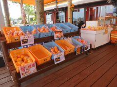 ここも柑橘類の販売、多いです。 季節も終わりですが、キンカンを2袋購入。いっぱい入って一袋300円。 安いです。