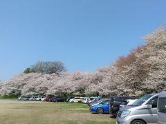 駐車場には待たずに入れました。 桜まつり期間中は有料ですが今年は中止なので無料です。