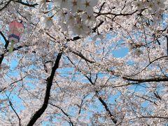 豊公園の桜は満開でした!   こんなに桜が満開の時期は例年お花見客でごった返しているんでしょうけど、やっぱり今年はかなり少ない。 結構こじんまりと家族連れが、桜の木の下でお弁当食べたりしてるくらいでした。