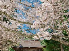 いや~、お城と桜のコラボもキレイですが、お寺と桜のコラボもかなり美しい!   平日だからというのもあるかもしれませんが、私以外には1組しかお会いしませんでした。